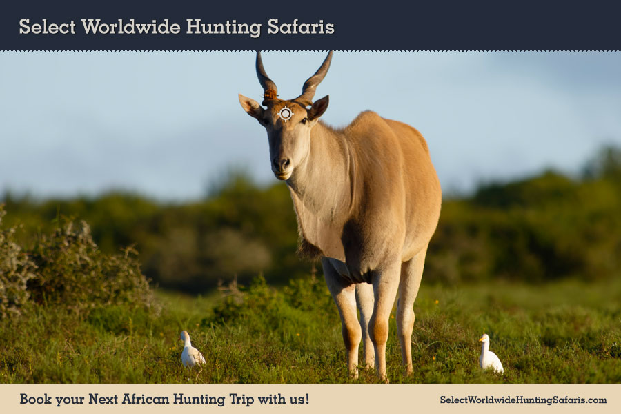 Hunting Cape Eland in Southern Africa