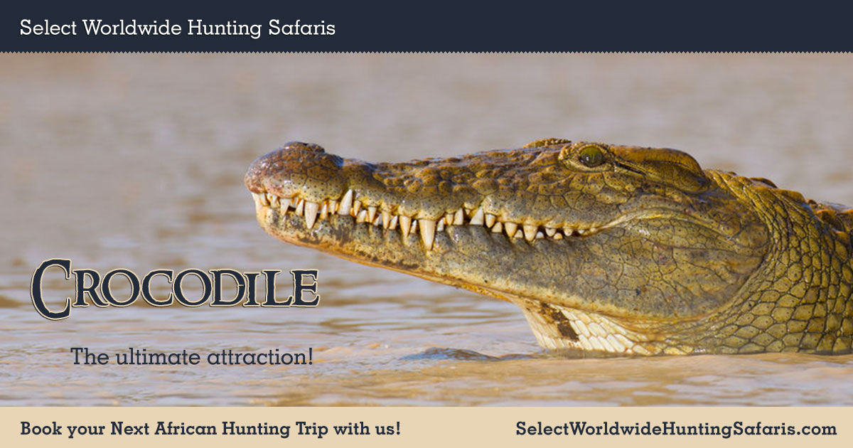 Crocodile Hunting In South Africa With Select Worldwide Hunting
