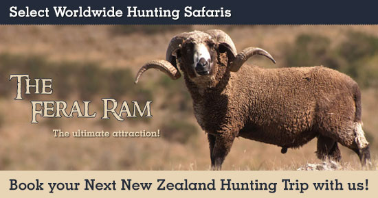 Feral Ram Hunting in New Zealand