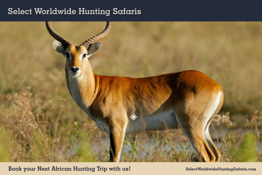 Hunting Red Lechwe in Southern Africa