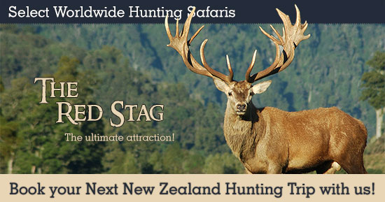 Red Stag Hunting in New Zealand