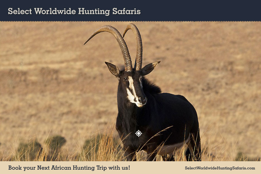 Sable Shot Placement Hunting in South Africa