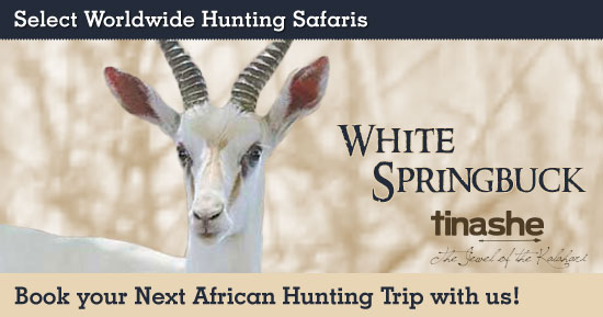 Hunting White Springbok in Southern Africa