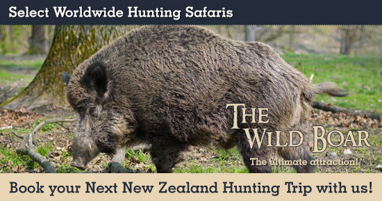 Wild Boar Hunting in New Zealand