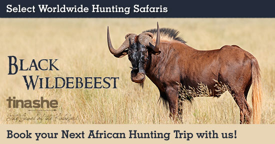 Hunting Black Wildebeest in Southern Africa