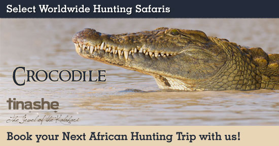 Hunting Crocodile in Southern Africa