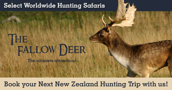Fallow Deer Hunting in New Zealand