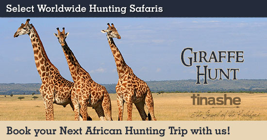 Hunting Giraffe in Southern Africa