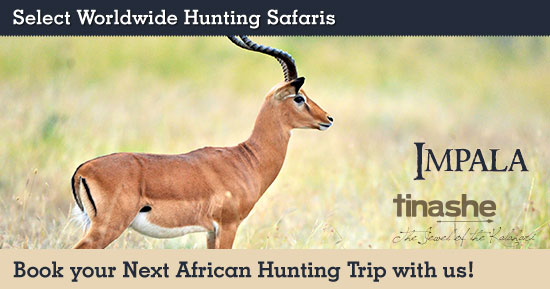 Hunting Impala in Southern Africa