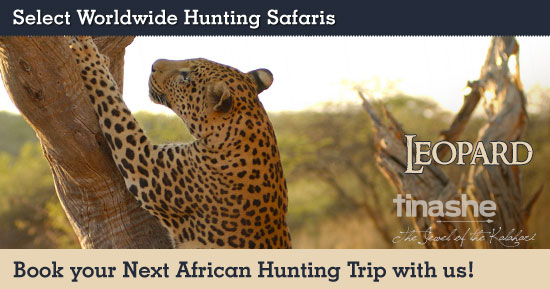 Hunting Leopard in Southern Africa
