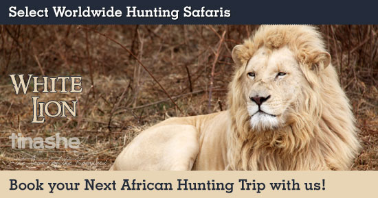 Hunting White Lion in Southern Africa